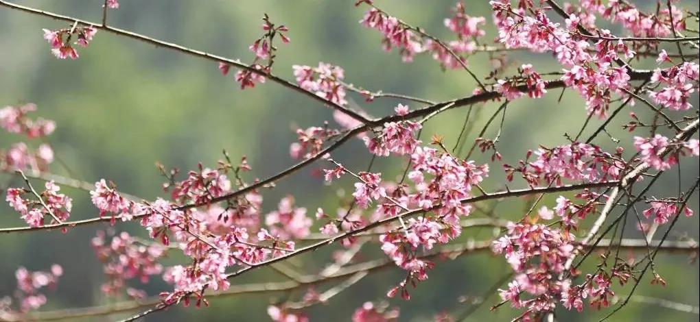 《心乃大药》—闲来数数花瓣 闷气自然消散